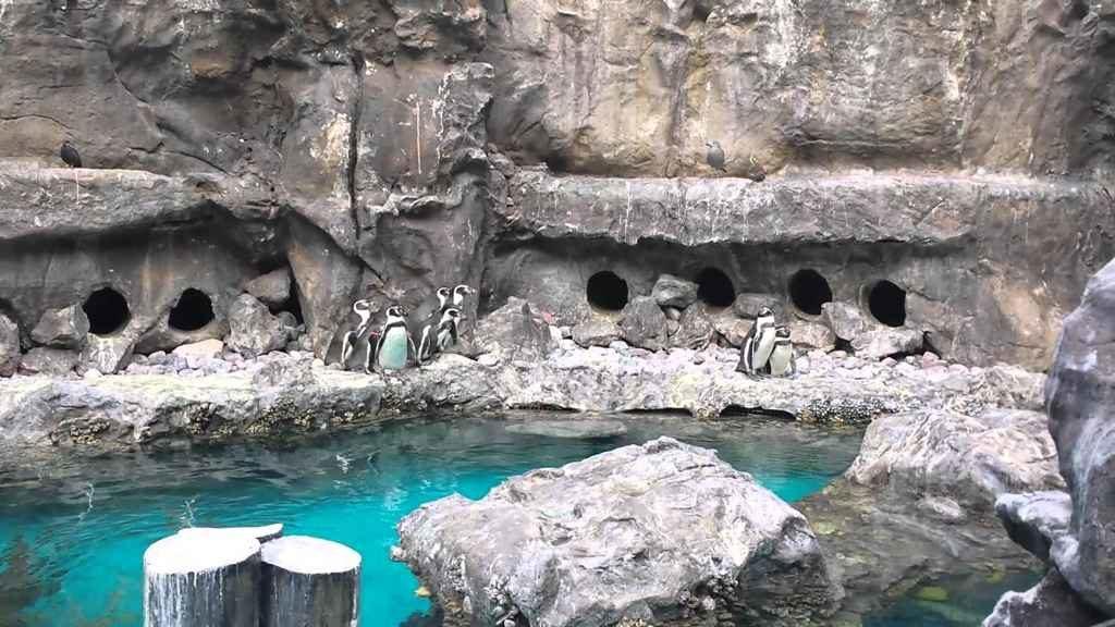 Pingwiny w skalnym wybiegu z betonu